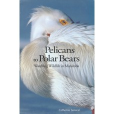 Pelicans to Polar Bears: Watching Wildlife in Manitoba by Catherine Senecal