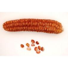 Mandan Sweet Corn Seeds